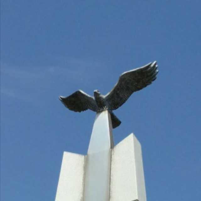 飛翔する鷹の下