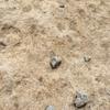化石野外学習地