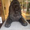 仙台のライオン