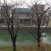 深草稲荷保護会「流水の桜」