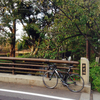 玉川上水の新家橋