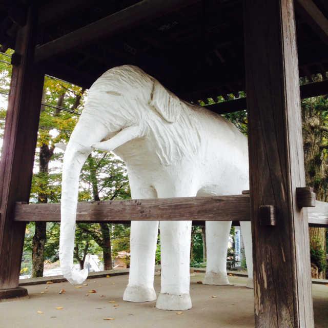 鐘の代わりにまさかの白象