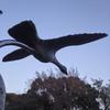 羽ばたいている白鳥の
