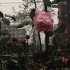 牡丹と薔薇?