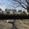 旧東海道から外れまし