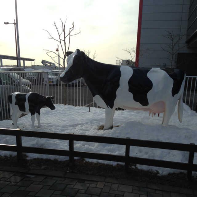 乳牛(ホルスタイン)