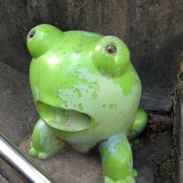階段の途中にカエル?