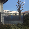 伝統ある金沢小学校