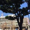 埼玉県庁を見守るシラカシ
