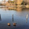 野鳥の楽園 善福寺公園