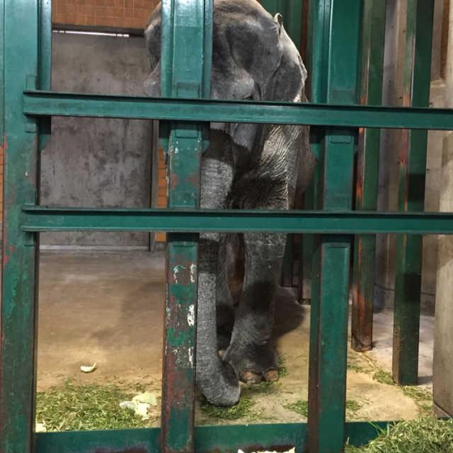 象のはな子さん