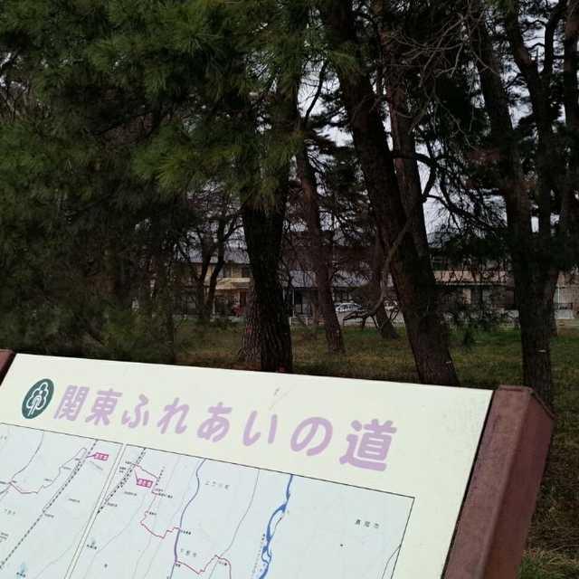 祇園原の松林
