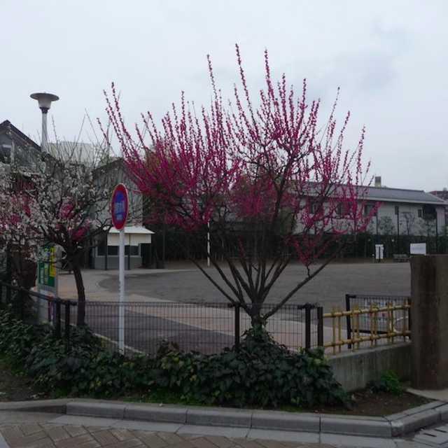 2 西蔵院