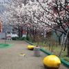 桜の木の下に