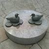 播磨坂の鴨