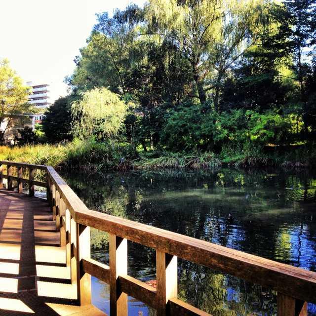 恋ヶ窪の地名もこの池からつけられました。