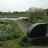 新多摩川橋付近の水辺