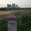 多摩川左岸の遊歩道で