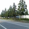 徳次郎六本木杉