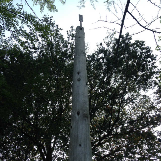 秩父神社の御柱