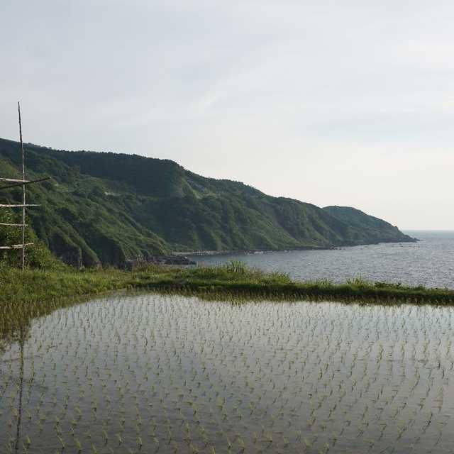 岬の田んぼ