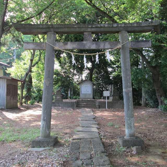 愛宕神社のケヤキ