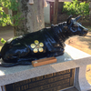 北野神社の撫で牛