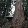 千年の古木