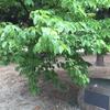 静岡県韮山町の記念植樹