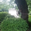 ソメイヨシノ原木はこれだー