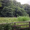 三宝寺池沼沢植物群落