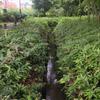 大沼田用水