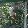 赤い鳥がいます