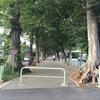 ケヤキ並木(参道)
