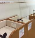 国立国際美術館(B1)の授乳室・オムツ替え台情報