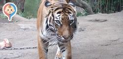 【関東】授乳室完備の動物園