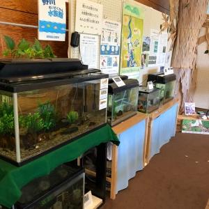 この周辺で生息している。昆虫やカエル、の展示もしてました。