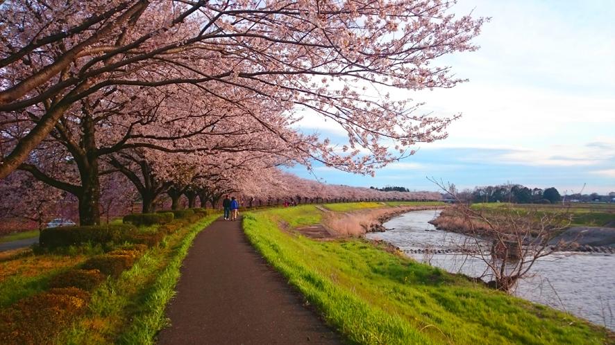 桜満開その2