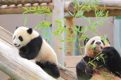 動物園デートを成功させる秘訣&関東のオススメ動物園10選