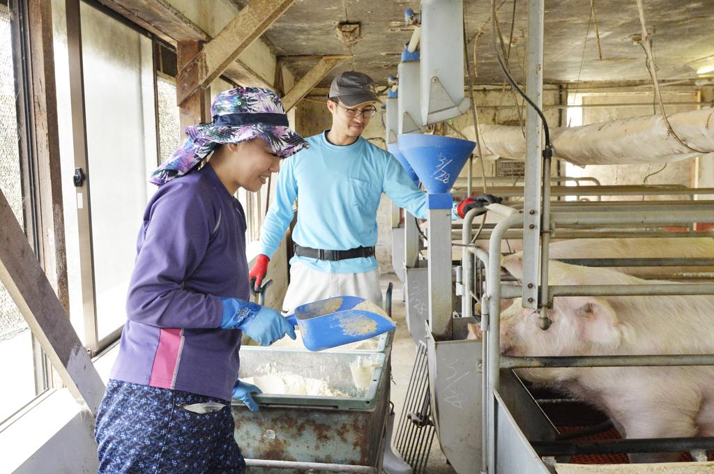 豚の世話をする平野夫妻