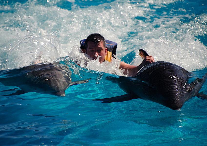 씨라이프파크 (해양공원) - 돌핀 로얄 스윔