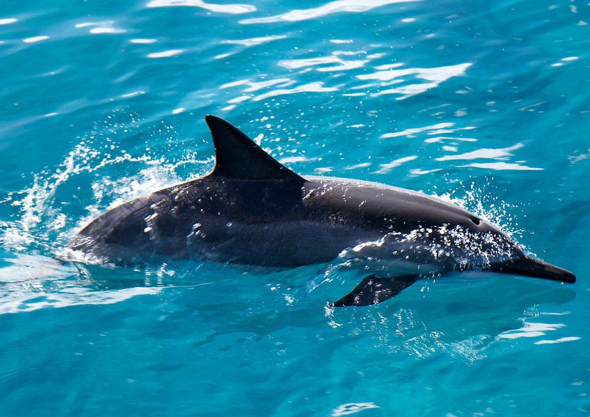 [Dolphin Star]ドルフィン・ウォッチングクルーズ