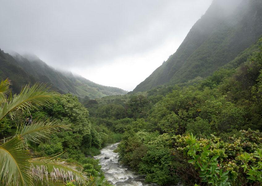 원시 시대를 연상케하는 울창한 열대 우림의 풍경을 감상할 수 있는 이아오 계곡