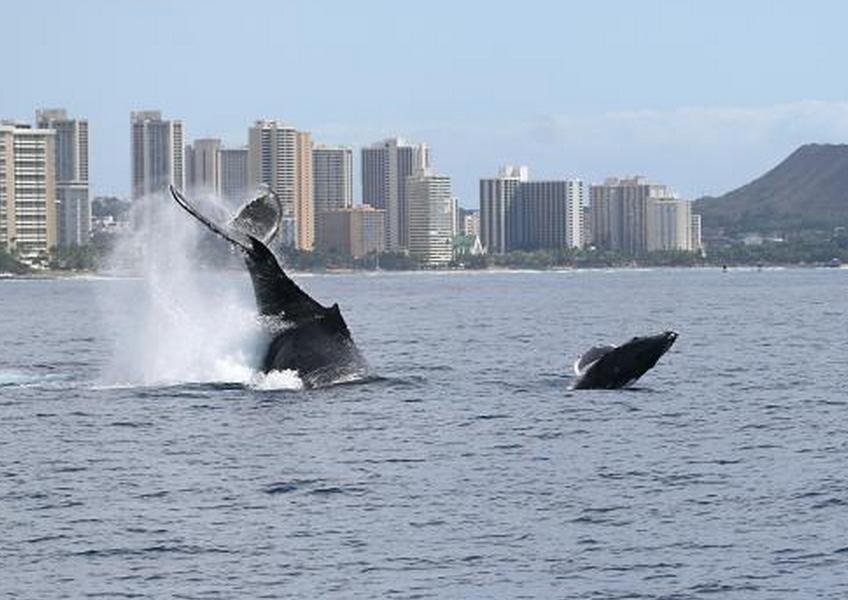 혹등고래 관찰크루즈 + 스쿠버다이빙