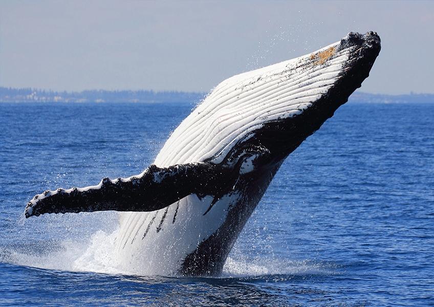 혹등고래 관찰크루즈 + 수중스쿠터