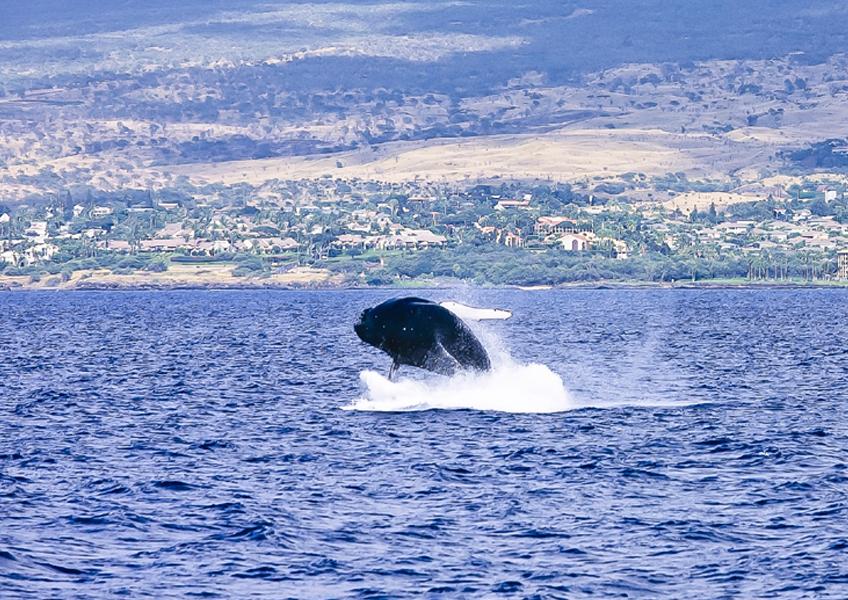 혹등고래 관찰크루즈 + 디럭스 터틀스노클링 패키지