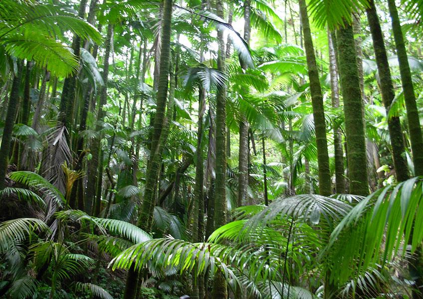 ジャングル ハイキング ツアー