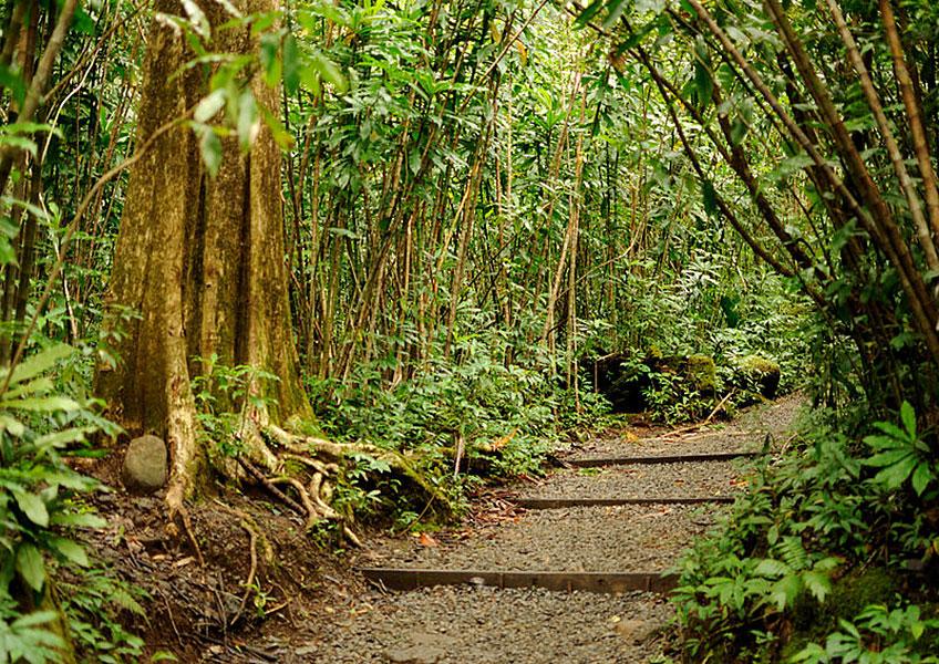 [ネイチャー&ユー ] 緑豊かなハワイの大自然を体験しよう!