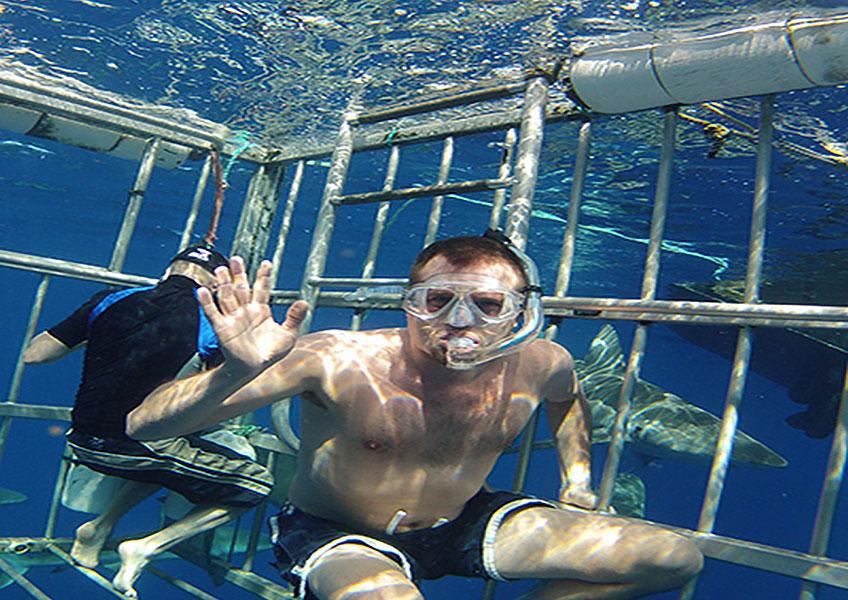 サメと泳ぐ+ノースショア観光