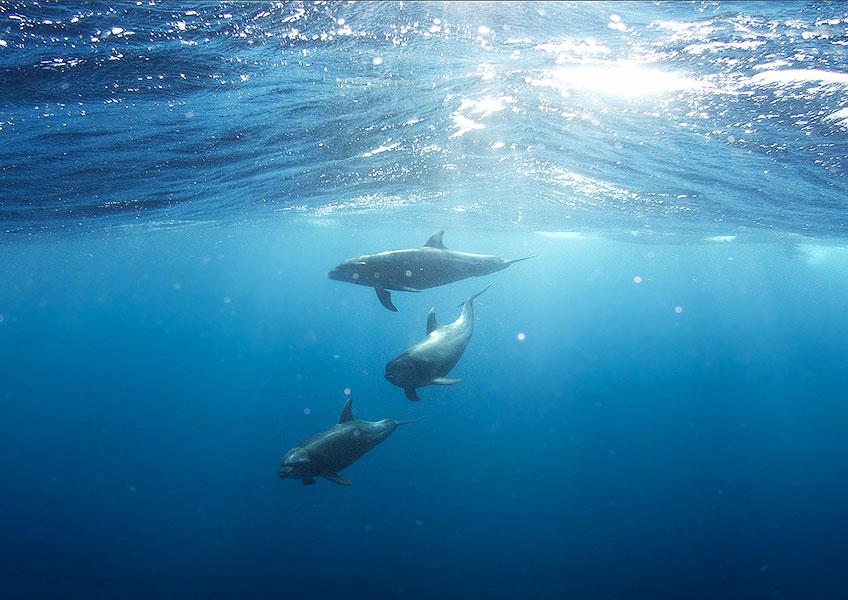 私立イルカ中学野生のイルカと泳ぐツアー